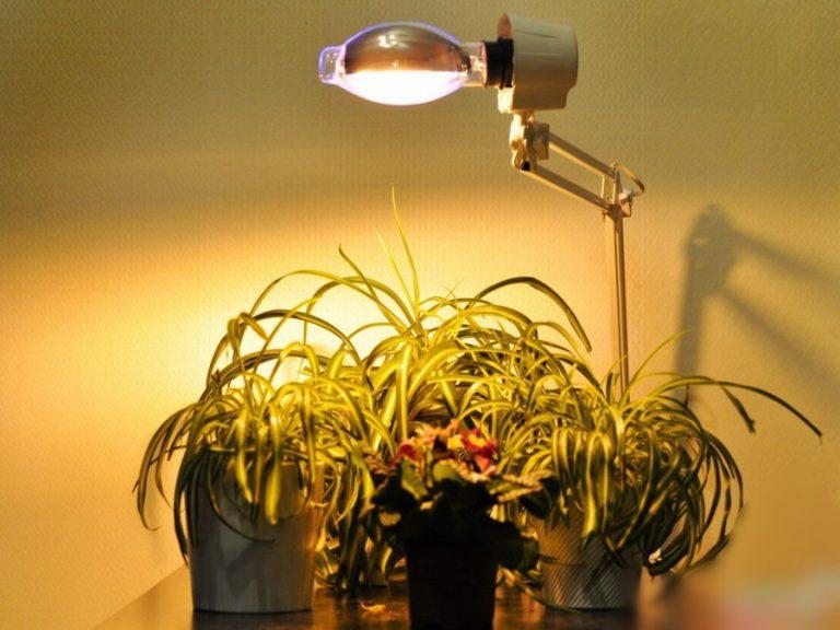 Лампа для домашнего выращивания растений 35