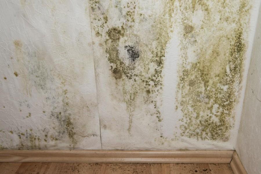 фото плесень в квартире много зелени